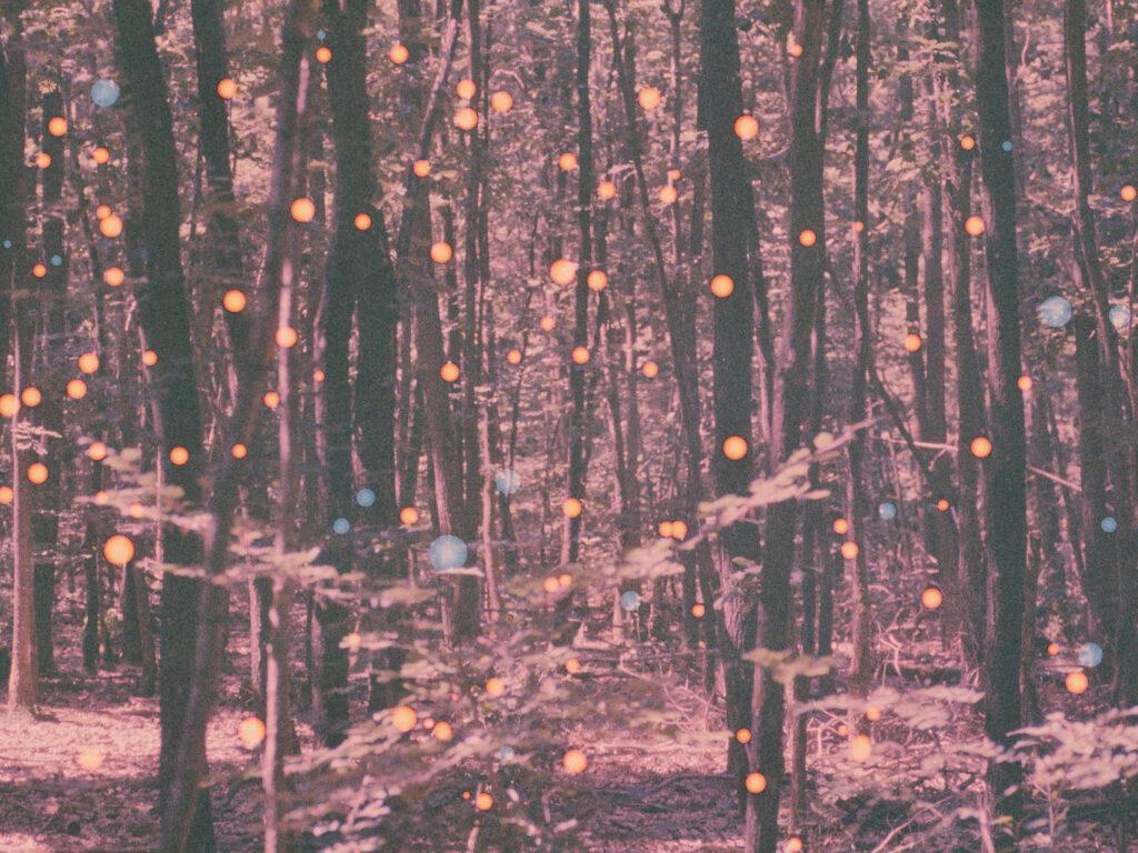 In einem verschneiten Wald scheinen lauter kleine Lichter aufzublinken.