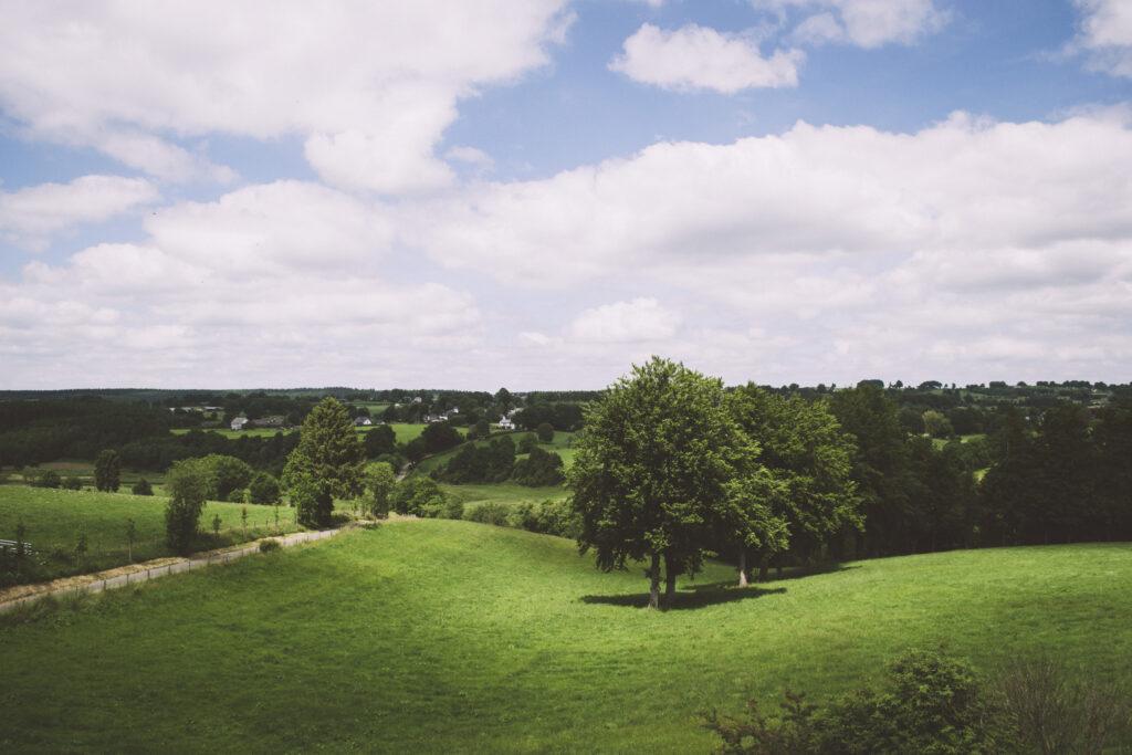 Blick in die sommerliche Eifel mit grünen Wiesen, vereinzelten Bäumen und einem schmalen Weg durch die Wiesen. Im Hintergrund stehen ein paar Häuser. Der Himmel ist blau und leicht bewölkt.