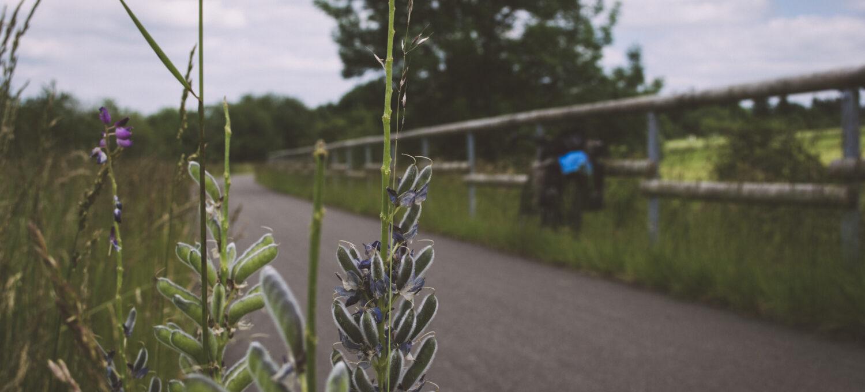 Ein Bahntrassenradweg. Im Vordergrund steht eine Pflanze, im Hintergrund auf der anderen Seite das asphaltierten Wegs lehnt mein Rad an ein hölzernes Geländer.