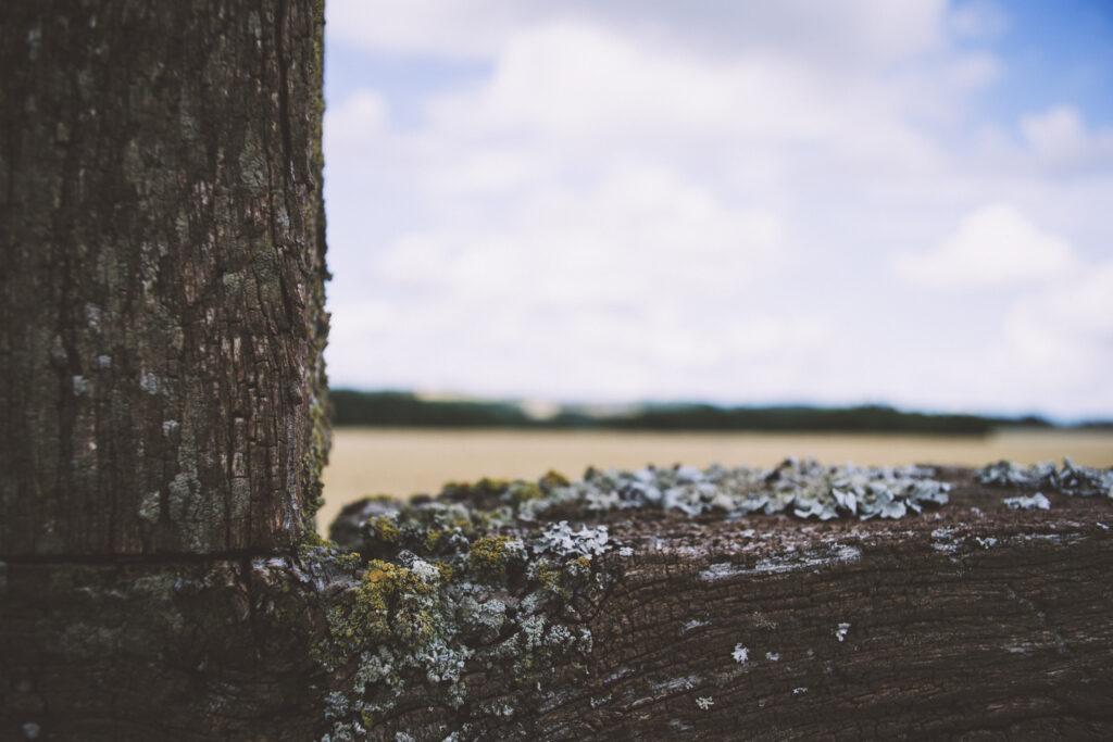 Nahaufnahme von einem verwitterten Holzkreuz. Im Hintergrund verschwommen liegen die Felder des Hunsrücks.