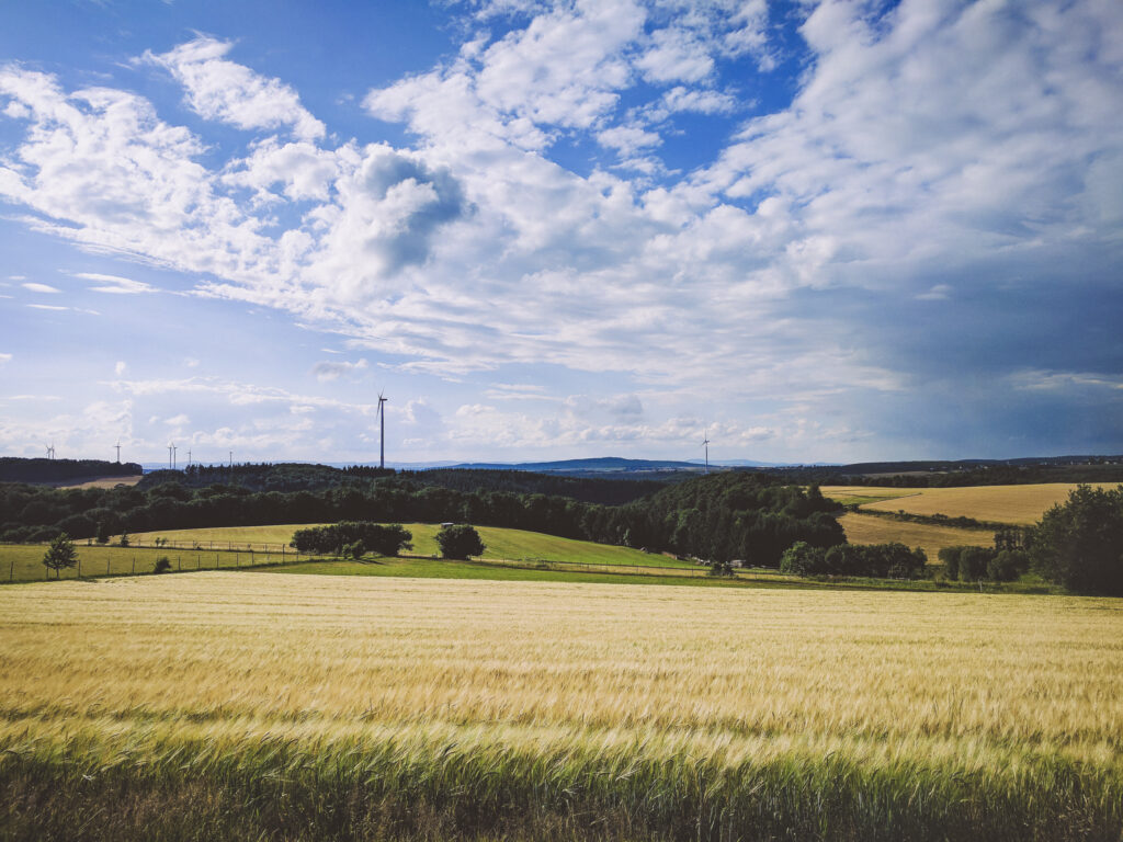 Hunsrück-Weiten: gold-gelbe Getreidefelder, Weiden und Wald. Im Hintergrund ragen vereinzelt Windräder unter leicht bewäölktem blauen Himmel empor.